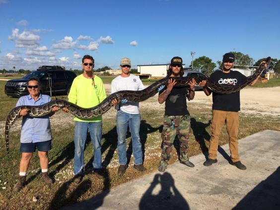 Охотник изсоедененных штатов убил самого крупного питона воФлориде