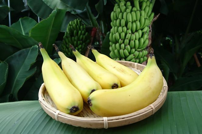 Японец ради хобби научился выращивать бананы со съедобной шкуркой и превратил это в бизнес. Секрет в заморозке