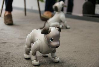Этот робопёс может растопить даже каменные сердца. Что и произошло на технологической конференции