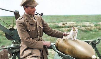 Котята военных лет. Мужчина восстановил фото времен I мировой войны. Оказалось, перед котом не устоит и солдат