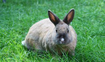 Зоомагазин отказался продавать кроликов перед Пасхой. Всё дело в безответственности людей