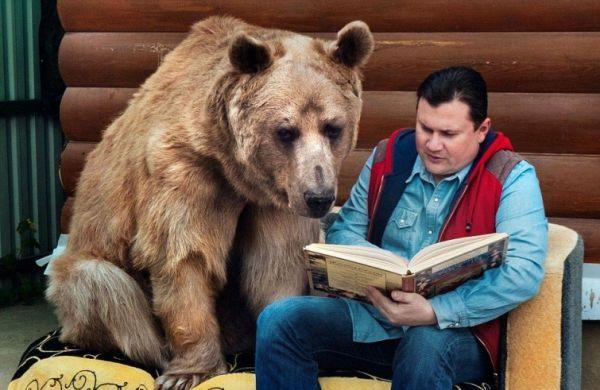 В Швеции медведи «приспособились» к местным законам. Теперь их дети живут с родителями дольше обычного