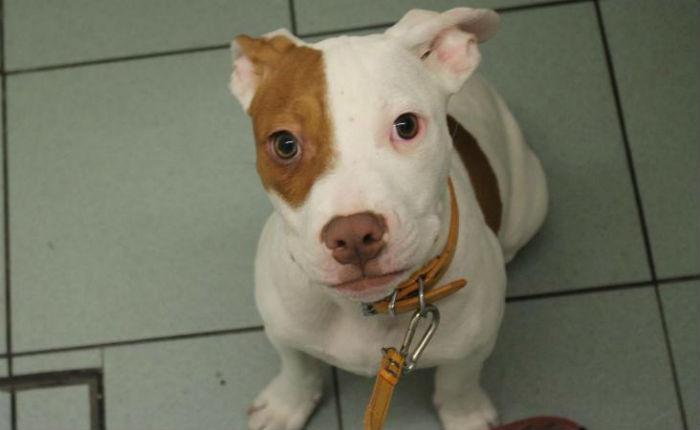 Глухой пёс научился понимать язык жестов. И хозяева не забывают показать ему, что он хороший мальчик ?