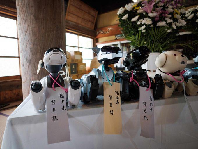 Думаете, отпевание для робопёсиков — фантастика? В Японии это реальность, и очень трогательная