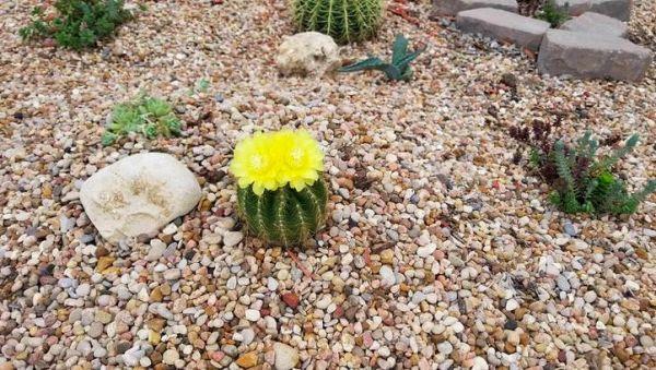 Мужчина создал сад в память о покойной жене. На помощь пришла фея с огромными кактусами