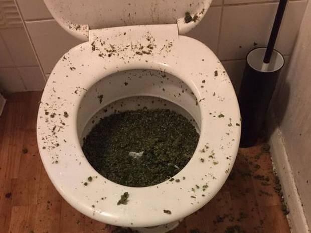 Наркоторговцы пытались смыть коноплю в унитаз, но получился настоящий подарок для полиции