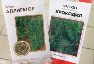 Редис Олег и томат Самохвал. Как садовые растения обретают другую жизнь в паблике «Странные названия рассад»