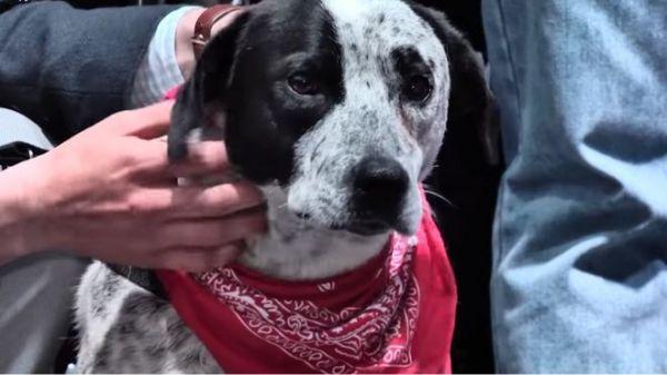 Барбос армянской революции. Как пёс Чало шёл в Ереван, стал другом Пашиняна и символом протеста