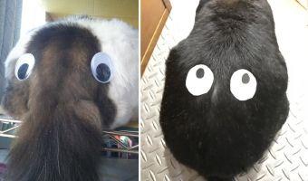 Волосатый хобот и пара больших глаз. Японцы превращают питомцев в монстров, и это жертва во имя тренда