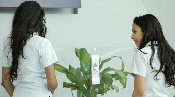 Дети ругали и хвалили растения ради эксперимента. Жертва буллинга завяла через 30 дней