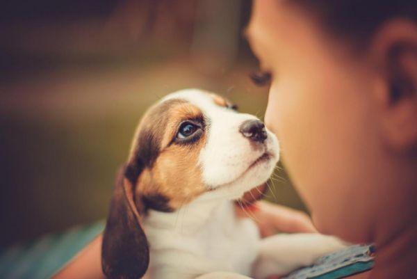 «Предложить в обмен сестру». Чтобы получить собаку, дети создали тайный план против родителей, и готовы на всё