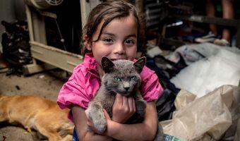 Святые котики! Фотографы показали игрушки детей из бедных и богатых стран, и в них нашлось что-то общее