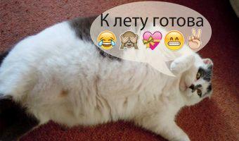 Пухленький кот-философ Ёнзу застрял в дверях. Девочки, худевшие к лету, узнали в нём себя