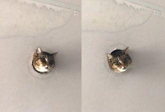Кошка пришла к любителям животных через дыру в потолке. И в ней увидели надежду интернета на спасение