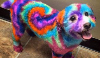 Британка раскрашивает свою собаку во все цвета радуги. И той нравится (точнее, в этом уверена её хозяйка)