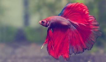 Американка думала, что её рыбка сменила цвет чешуи. Правду она узнала лишь через год