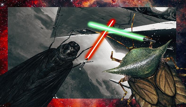 Художник превращает насекомых в персонажей «Звёздных войн». Такими Йоду и Чубакку вы ещё не видели