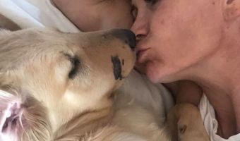 Самоотверженность уровень собакен. Щенок Тодд спас хозяйку от гремучей змеи, приняв на себя её укус