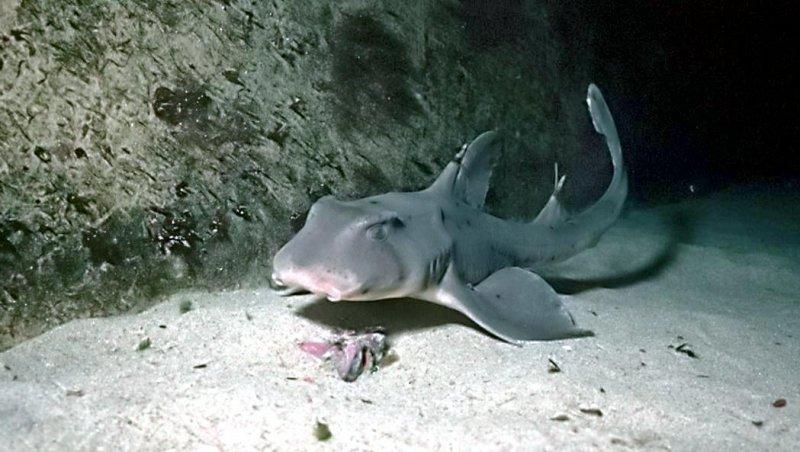 ВСША изокеанариума украли акулу