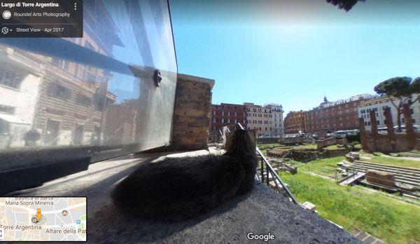 ВРиме кот влез в эпизод наGoogle-картах истал знаменитостью