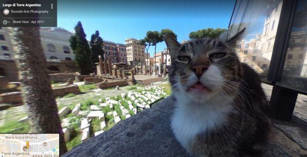 Итальянский кот стал знаменитостью, попавшись наGoogle Maps