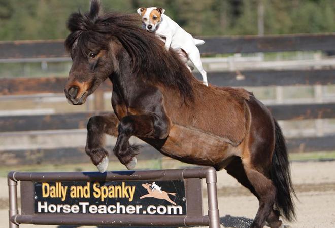 Пёс с ранчо научился кататься на пони без седла. Всё потому, что это дружба, и в ней нет места людишкам