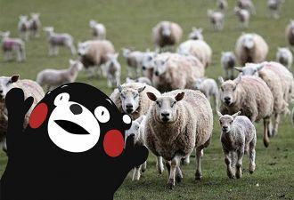 Десятки коз и овец сбежали от людей, но никто не понял как. Похоже, у животных был наглый рогатый сообщник