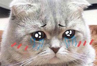 Байкер спас котёнка от машин и хотел оставить его на трассе. Но животное оказалось слишком упрямым