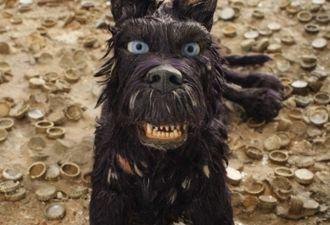 На рынке Мехико завёлся пёс-финансист, который сам покупает себе сосиски. Песо хитрюга вымогает у прохожих
