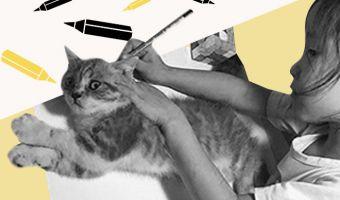 На Reddit появился мем с обведённым котиком. И он отлично опишет любое некачественное копирование