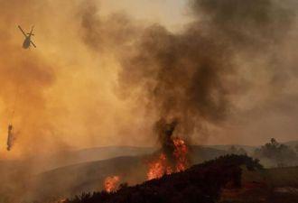 Копы спасают десятки зверей из огня за минуты. При просмотре такого триллера от первого лица — мурашки по коже