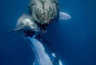 Женщина так испугалась китов, что вызвала копов. И кажется, от её криков страшно стало самим китам
