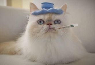Всё о полисах здоровья или как выбрать медстраховку в офис? Задача оказалась не из лёгких