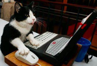 Экс-разработчик «ВКонтакте» запустил новый мессенджер для самых скрытных. Его плюсы — анонимность и котики