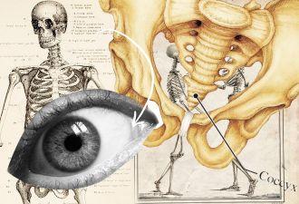 Антрополог показала, сколько в наших телах лишних органов. Из-за лени эволюции их куча, и это не только копчик