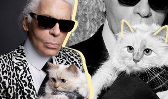 После смерти Карла Лагерфельда его состояние перешло к кошке. И похоже, теперь это самая богатая киса в мире