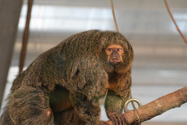 как живут обезьяны в природе видео