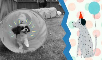 Блогер сняла день рождения собаки, прошедший круче её собственного. Твиттер разглядел в этом кое-что пугающее