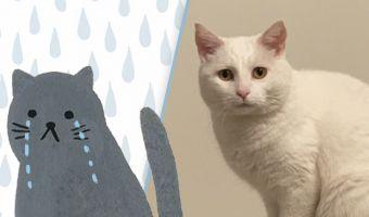 Хозяйка случайно сделала кошку звездой твиттера. Всё дело во взгляде кисы, от которого загрустит кто угодно