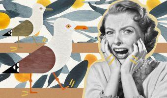 Британцы нашли лайфхак для борьбы с наглыми чайками. Птицы смущаются, и им уже не до воровства