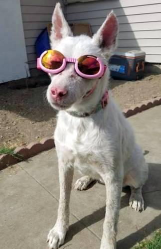Собака гуляет в солнцезащитных очках и завоёвывает сердца людей. Но она не королева моды, а страдает от недуга
