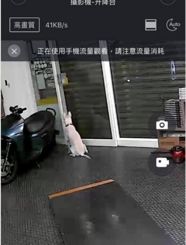 Что делают собаки, когда нас нет дома? Парень установил скрытую камеру, но от увиденного чуть не расплакался