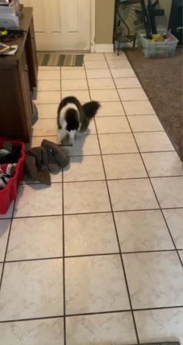 """Кот играет со своей """"тенью"""""""