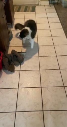 Барли сменил положение и поближе подобрался к обуви своей хозяйки