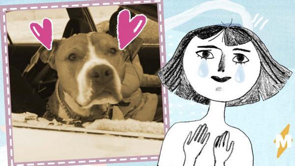 Девушка приютила подругу, а она увезла её пса за 2 000 км. Вернуть животное помогал весь мир - и получилось