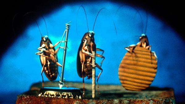 """""""Пойду на """"Кошек"""", как на хоррор"""". Пользователей твиттера напугала сцена с тараканами, ведь это настоящая жуть"""