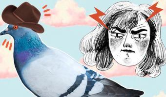 В Лас-Вегасе появились голуби в ковбойских шляпах. Они не продвигают Old Town Road, а напрягают зоозащитников
