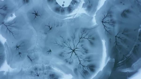 Дроны сняли, как лес вверх ногами растёт подо льдом, и это не сюжет эльфийской саги. А красивейшая иллюзия