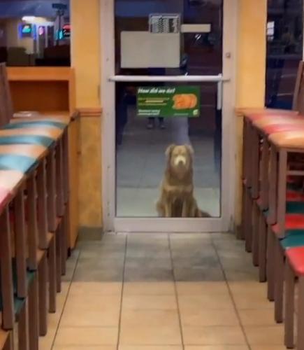 На TikTok появилась звезда, которую мы заслужили. Это собака Салли, и она - самая милая попрошайка на свете
