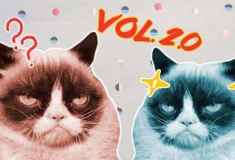 Grumpy Cat восстала, и она ещё злее: люди обсуждают новую недовольную котю. Но не все верят, что она реальная